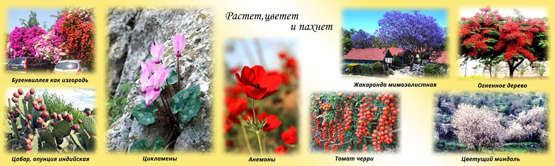 Коллаж из разных фотографий
